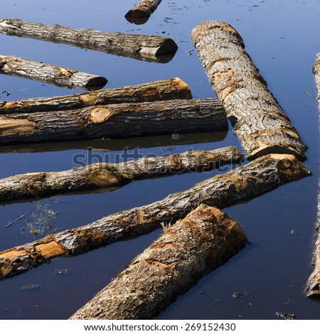 Logs sit in a sawmill pond awaiting processing in Oregon - stock photo