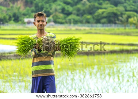 LOMBOK, INDONESIA - FEBRUARY 21, 2016 : Unidentified Asia boy hold sheaf of paddy on hand at Lombok, Indonesia - stock photo