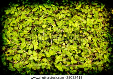 Lomofied green plant texture background - stock photo