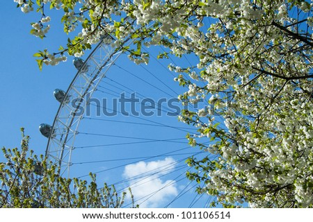 LONDON - APRIL 13: View of The London Eye behind blooming trees on 13 April, 2011 in London. At a height of 135m, it is the tallest Ferris wheel in Europe. - stock photo