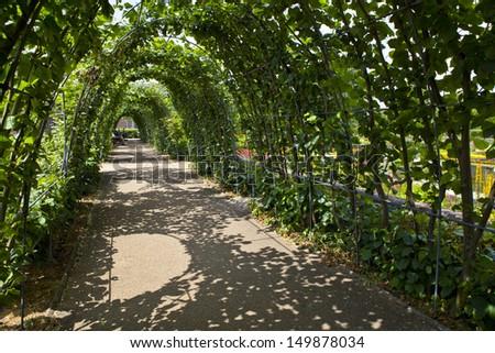 LONDON, UK - JULY 13, 2013: The beautiful trees that surround the Sunken Garden in Kensington Gardens, London. - stock photo