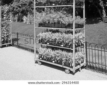 LONDON, UK - JUNE 11, 2015: Gardening works in St James Park occurs in every spring to plant new flowers in black and white