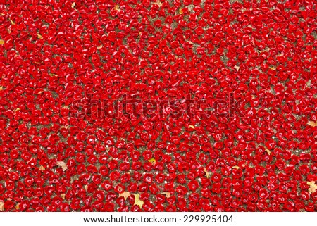 LONDON, UK - NOVEMBER 08: Detail of art installation by Paul Cummins at Tower of London. November 08, 2014 in London. The ceramic poppies were planted to mark the centenary of WWI's outbreak. - stock photo