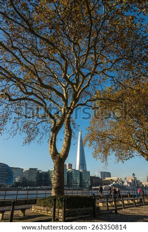 LONDON, UK - NOVEMBER 4, 2014 : London Plane Tree on the north bank of the River Thames by the Tower of London with a view across the river of the skyscraper Shard building. - stock photo
