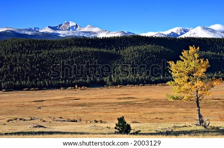 Lone Aspen tree with wooded hillside and Longs Peak in the background. From Moraine Park, Rocky Mountain National Park, Colorado - stock photo