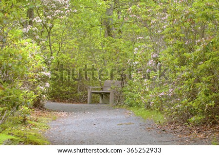 Lone bench along a mountain trail surrounded by mountain laurel in full bloom.
