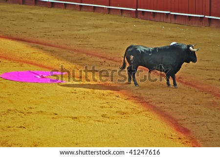 Lone bull with bullfighter's cape - stock photo