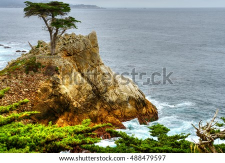 Lone cypress tree at Big Sur California