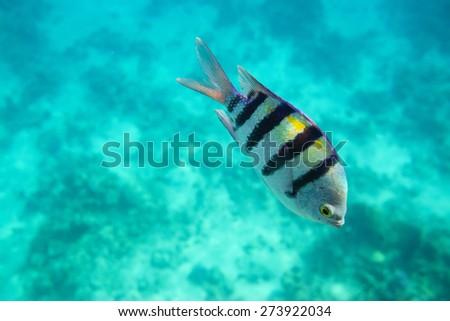 Lone fish in sea - stock photo