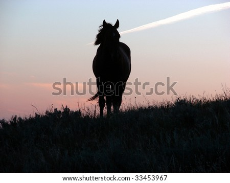 lone horse at sunset