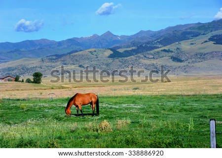 Lone horse grazes green pasture land in Paradise Valley at the foot of the Gallatin Mountain Range in Montana. - stock photo