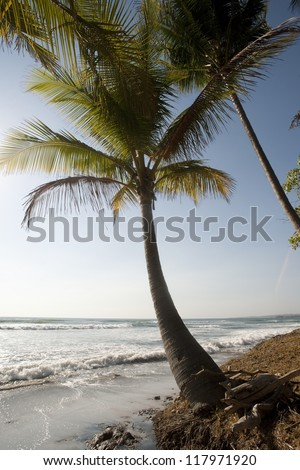 Lone palm tree at water's edge on the ocean beach - stock photo