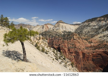 Lone pine on a steep cliff in Zion National Park, Utah - stock photo