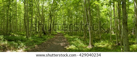 Lone Shieling | Cape Breton | Nova Scotia  Located North of Cape Breton Highlands National Park, this short trail goes through a 350 year old maple tree forest. - stock photo