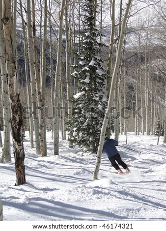 Lone skier weaves his way through bare winter aspens   Steamboat Springs,  Colorado - stock photo