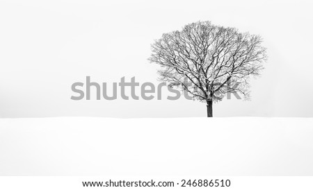 Lone snowy tree - stock photo
