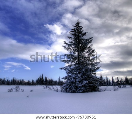 Lone spruce tree in the winter snow in Alaska with interesting clouds in the background.