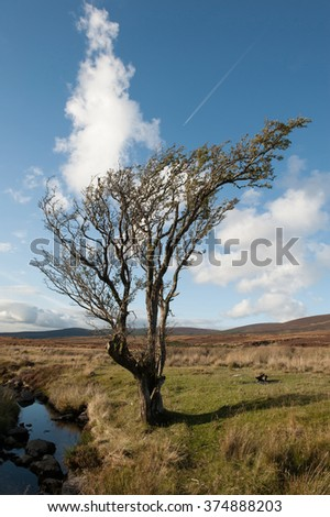 Lone tree against a blue sky with clouds