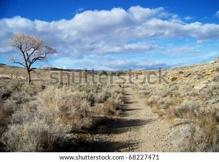 Lone tree along the Old Spanish Trail / Gunnison River Bluffs Trail system. Grand Junction Colorado. - stock photo