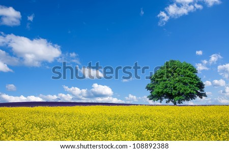 lone tree and rapeseed fields - stock photo