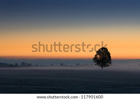 Lone tree at sunrise on a misty morning - stock photo
