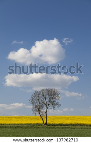 Lone tree in a field in Summer in Cambridgeshire,East Anglia, UK - stock photo