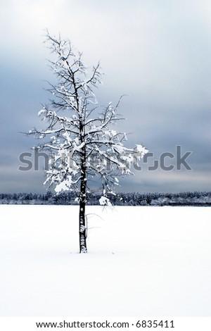 Lone tree in a moody winter scene - stock photo