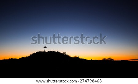 Lone tree on a hill at sunset