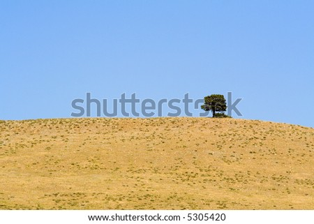 Lone tree on a hill in Custer State Park, South Dakota.