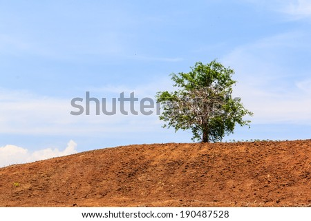 Lone tree on brown hill with blue sky