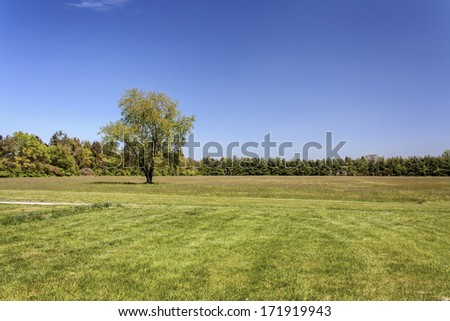Lone tree on grassy field stock photo 171919943 shutterstock lone tree on grassy field voltagebd Images