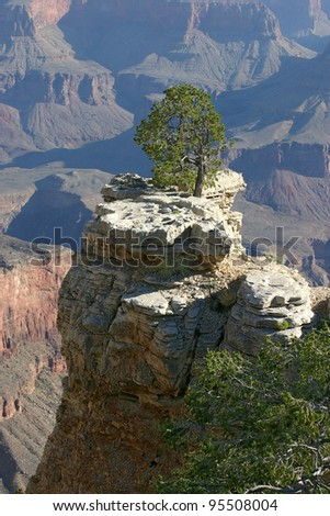 Lone Tree Overlooking the Grand Canyon - stock photo