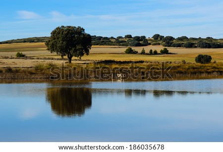 Lone tree reflecting in the lake - stock photo