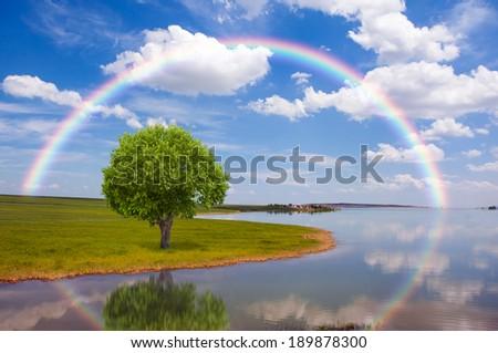 Lone tree with rainbow  - stock photo