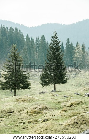 Lone trees on alpine pasture with healthy coniferous forest of spruce, fir, larch and pine trees in the background, wilderness area. Sustainable industry, ecosystem and healthy environment concepts.  - stock photo