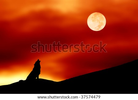 lone wolf howling at the full moon - stock photo