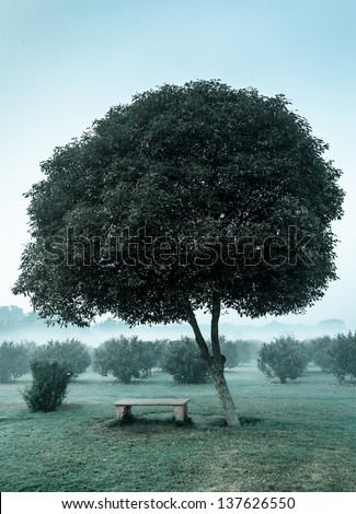 Loneliness solitude  sadness background - lonely tree and seating bench in morning mist fog - stock photo