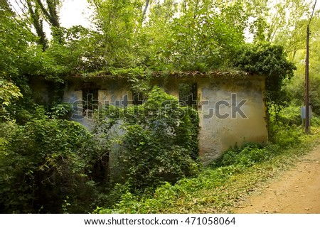 Lonely abandoned house covered in vegetation (Spain)
