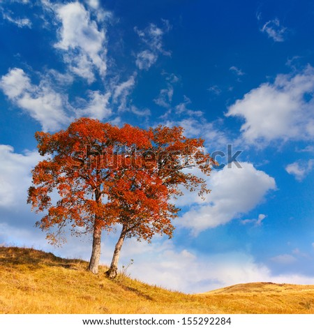 Lonely autumn tree against blue sky - stock photo