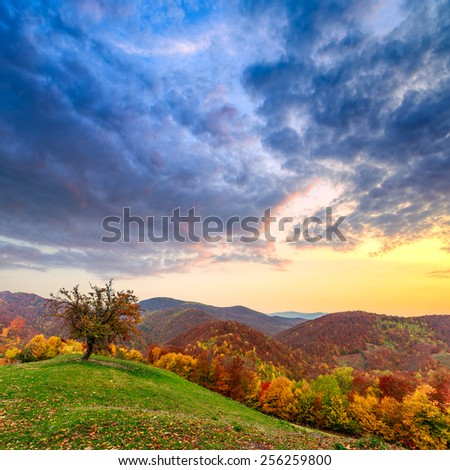 Lonely autumn tree  landscape in mountain Carpathian, Romania - stock photo