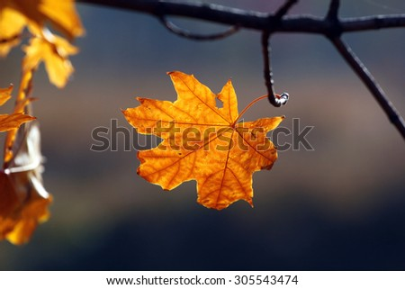 Lonely autumn yellow leaf on a tree - stock photo