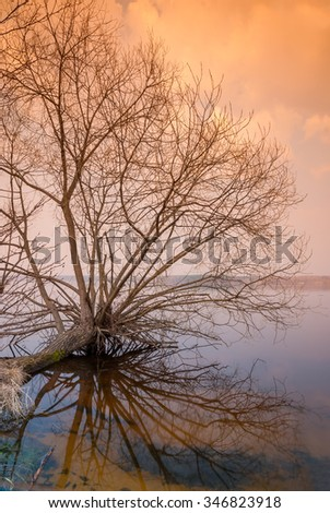 lonely bare tree is above the water surface - stock photo