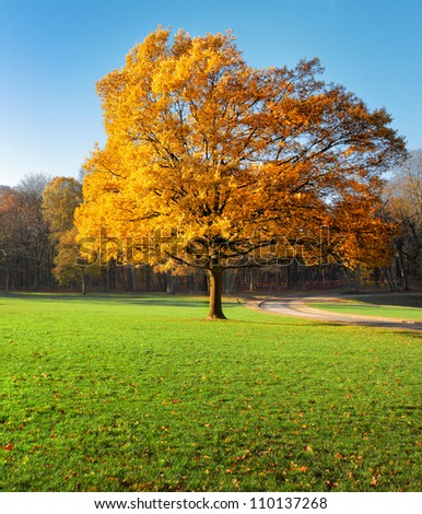 Lonely beautiful autumn tree. Autumn Landscape. - stock photo
