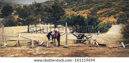Lonely beautiful horse in the mountains - stock photo