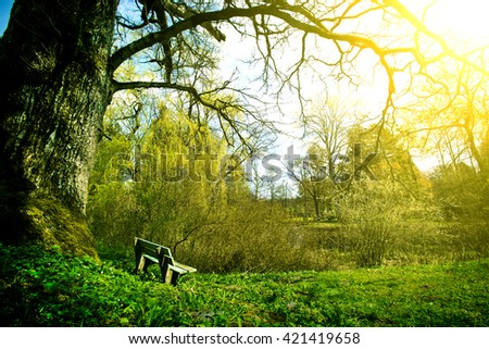 Lonely bench in the park at sunny summer day. Nature in the summer.