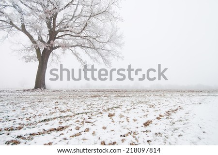 Lonely big tree in snowy field  - stock photo