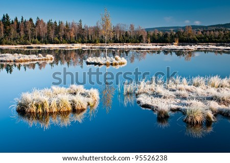 Lonely birch tree with it's reflection in marsh during icy cold morning - stock photo