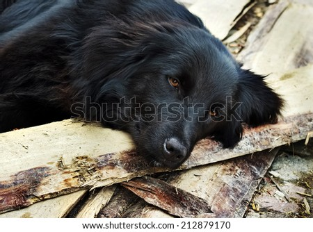 Lonely black dog with sad eyes is laying and waiting someone on outdoors - stock photo