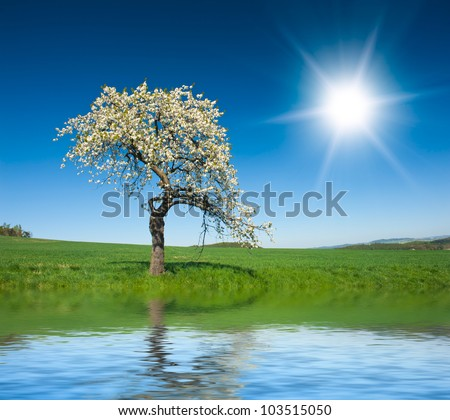 Lonely blooming apple tree in the green field with a blue sky and sun is reflecting in the water - stock photo