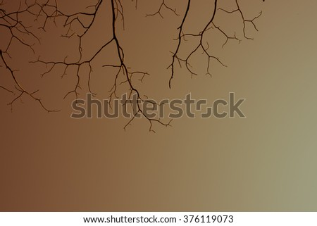 lonely branch abstract background,open sky background,season change